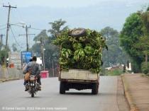 12 camerun