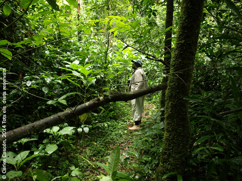 Kakemega Forest