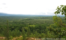 Vista desde el Buyangu Hill sobre el bosque