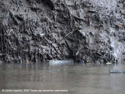 Ramisi river, Funzi Island