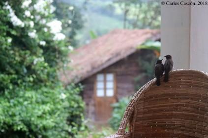 Pájaros en el Rwenzori View Guest-house de Fort Portal