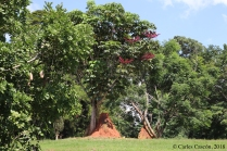 Entebbe Botanical Garden