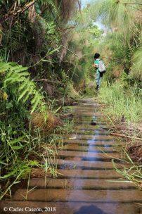 Bigodi Swamp