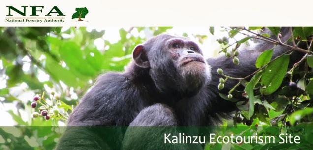 NFA-kalinzu72