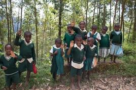 Bwindi Impenetrable Forest