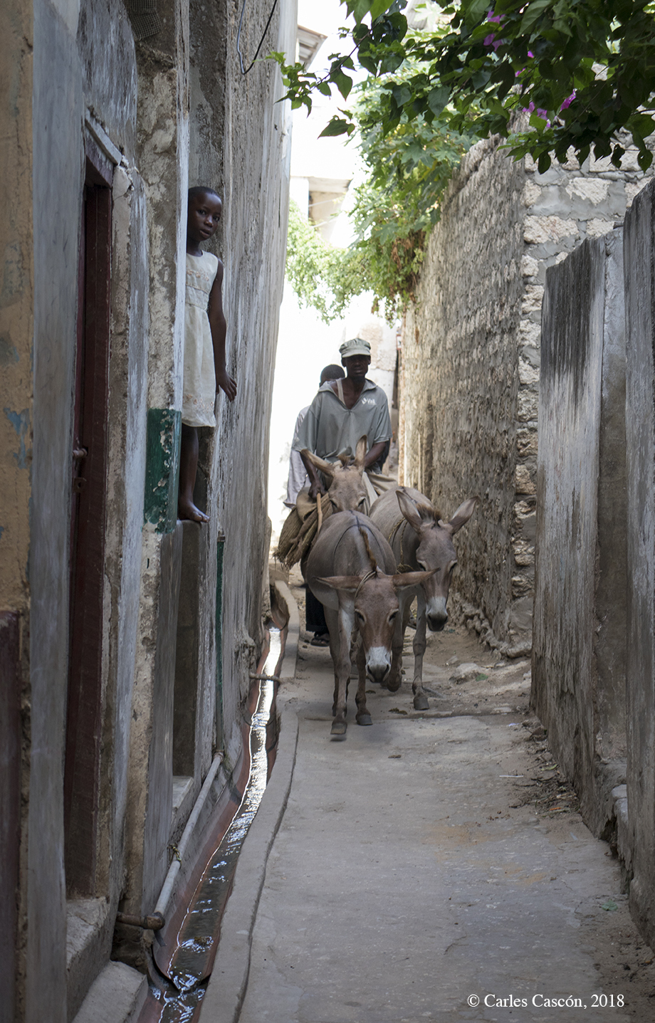 ¡Paso a los burros! Lamu Town