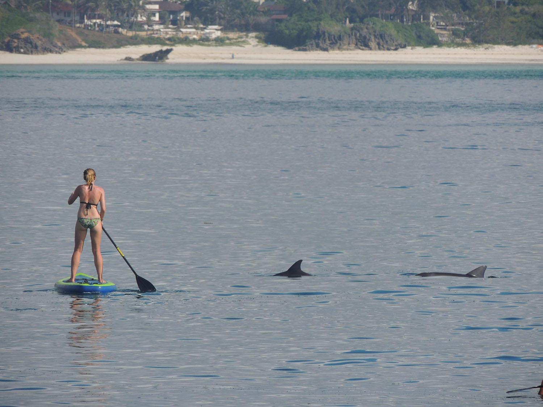 Tribe Watersports en Watamu paddle surf con delfines Kenia